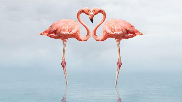 Un flamingo, doi flamingi