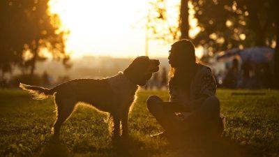 STUDIU – Cum știu câinii ce simțim?