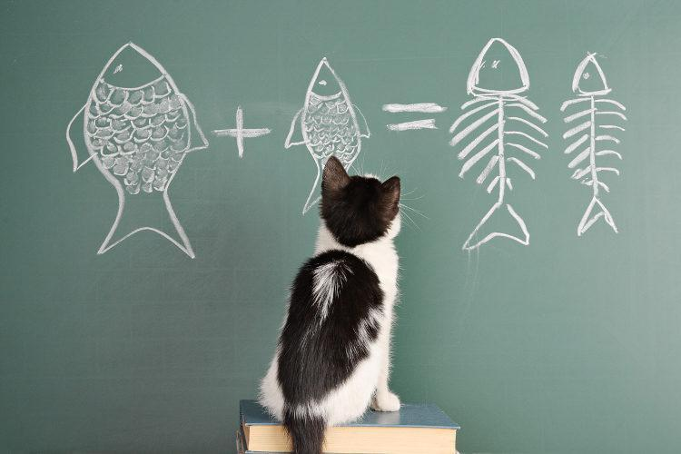 Curiozități lingvistice: pisica se perie sau se periază?